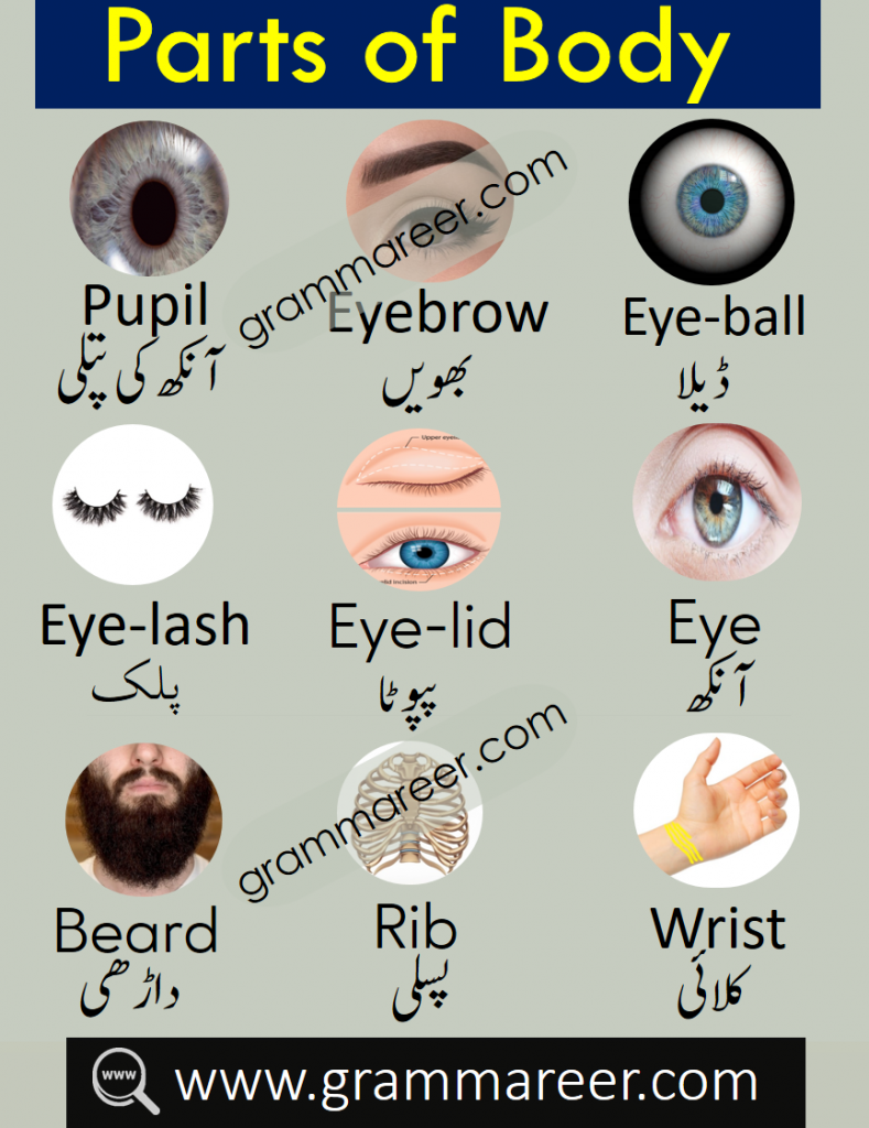 Names of body parts with Urdu meanings