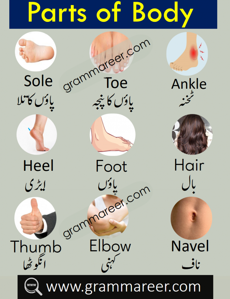 parts of body vocabulary with Urdu meanings and Pictures